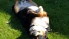 Kira der Hofhund