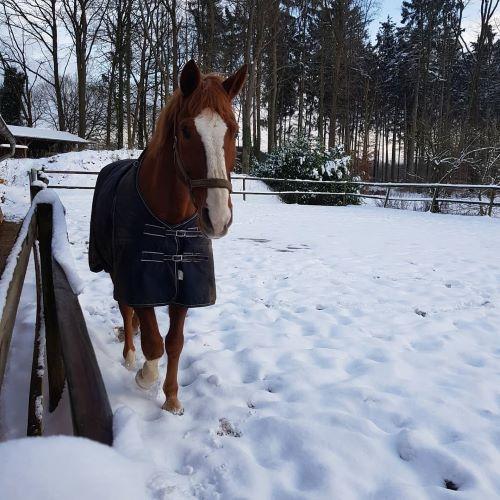 Rino im Schnee