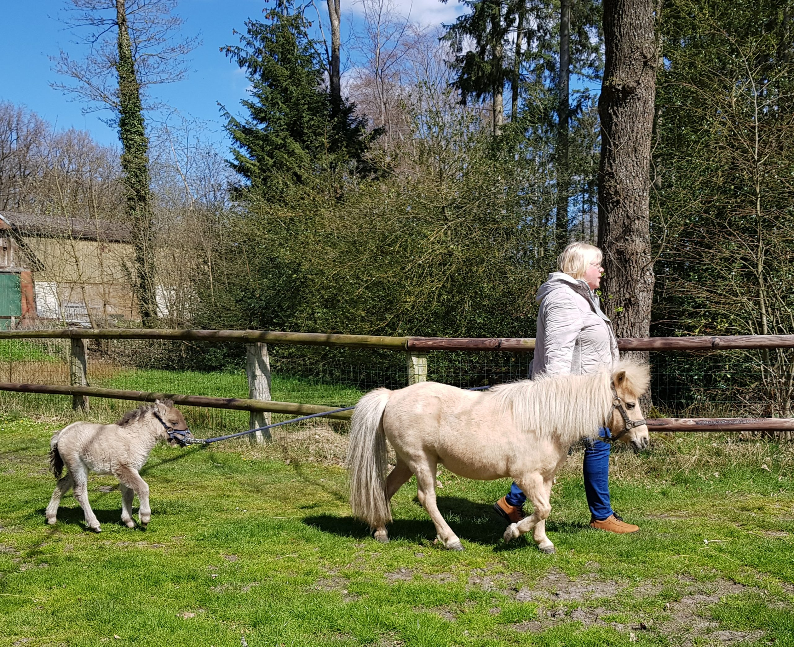Read more about the article Wir haben Nachwuchs im Pferdestall!